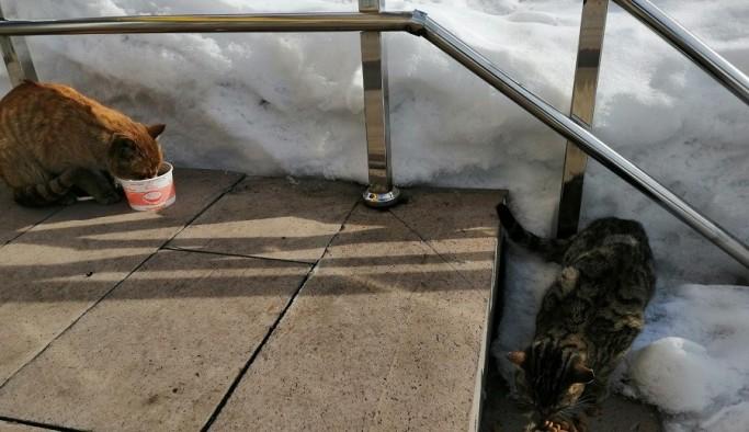 Karla kaplı Ovacık'ta sokak hayvanları unutulmuyor