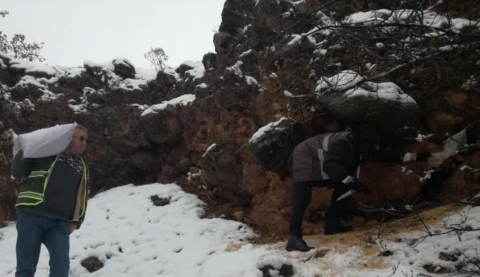 Tunceli'de yaban hayvanları için 2 ton yem bırakıldı