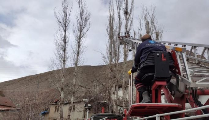 Tehlike arz eden kavak ağaçlarına müdahale