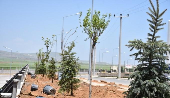 Tatvan'da 250 ağaç toprakla buluştu