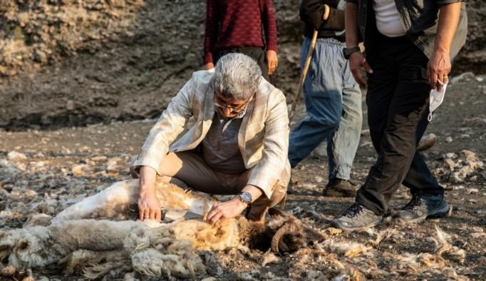 Vali Bilmez koyun kırkıp, berivanlarla sohbet etti