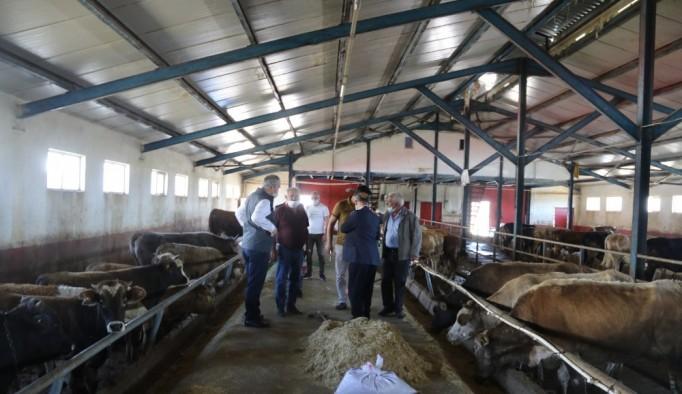 Kurban Bayramı öncesinde İl Müdürü Akar'dan Hayvan Pazarına ziyaret