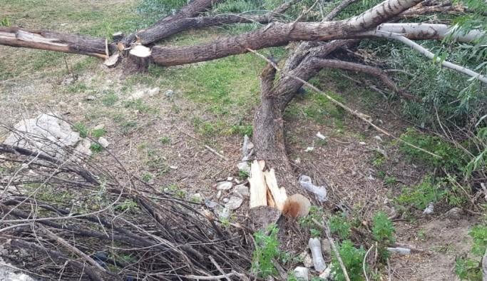 Erzurum'da sebepsizce kesilen ağaçlar tepki topladı