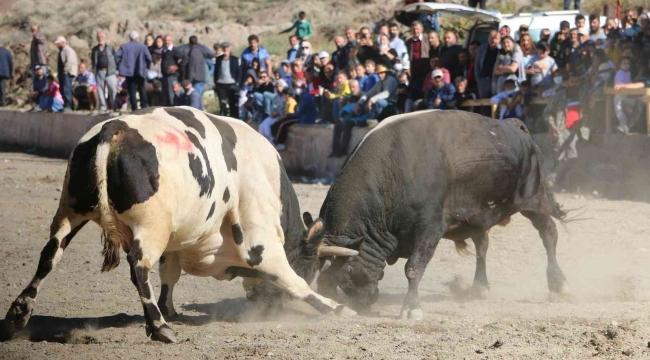 İspir'de panayır coşkusu, geleneksel boğa güreşleri nefes kesti - Alo 25