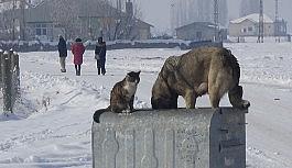 Dondurucu havada kedi ve köpeğin sıcak dostluğu