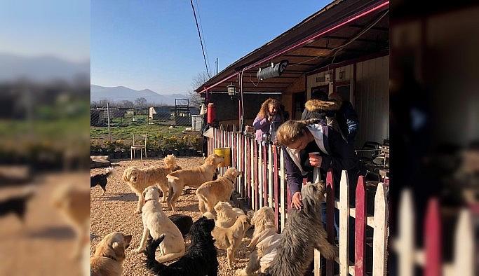 Özhan Gönüllüleri'nden sokak hayvanlarına destek
