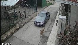 Lüks otomobiliyle kovaladığı sokak köpeğine kurşun yağdırdı