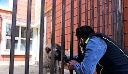 Yakutiye Belediyesi sokak hayvanlarını unutmadı