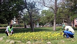 Van Büyükşehir Belediyesinin yetiştirdiği çiçekler kenti süslüyor