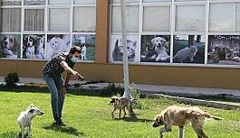 Yürüyemeyen köpek tedavi edildi