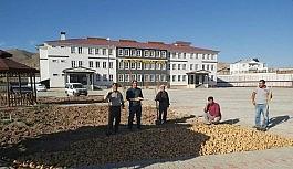 Okulun deposundaki patatesleri ekerek 1,5 ton hasat elde etti